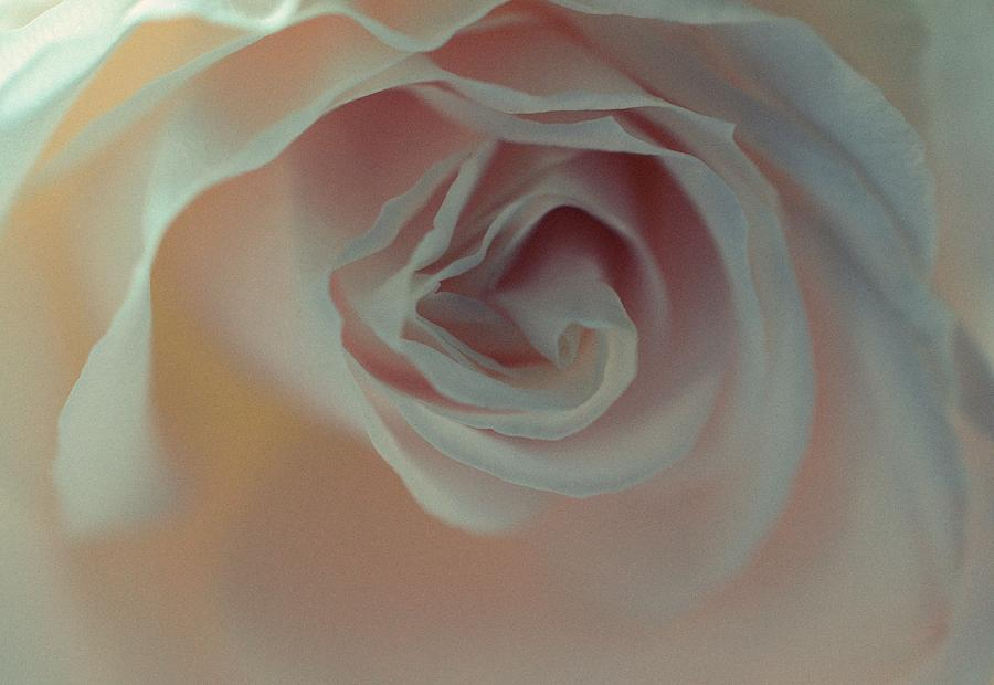 Rose - Poetic by Marianna Mills