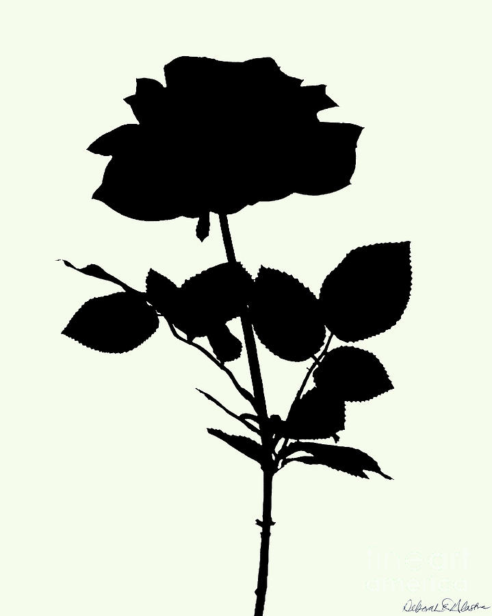 Rose Silhouette by Deborah Eve Alastra