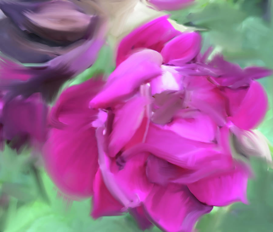 Rose Study #1 by Jonathan Thompson