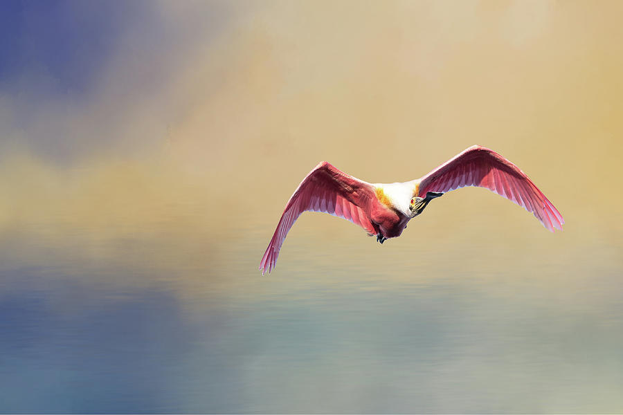 Roseate Spoonbill at Sunrise by Norman Peay