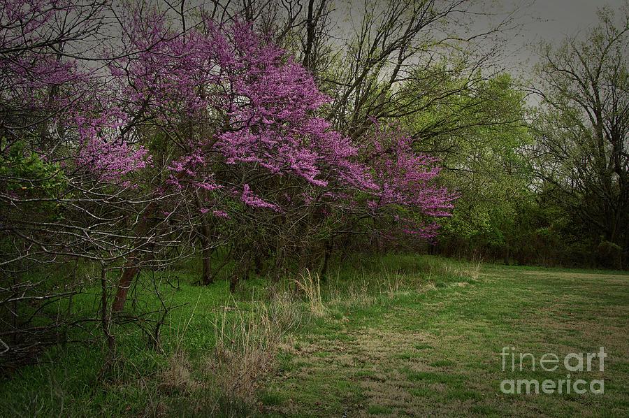 Rosebud Tree in Bloom - 2639 by Marvin Reinhart