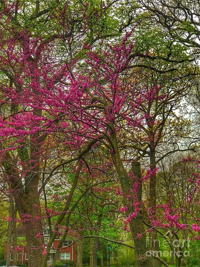 Rosebud Tree Photograph By Whitney Davison