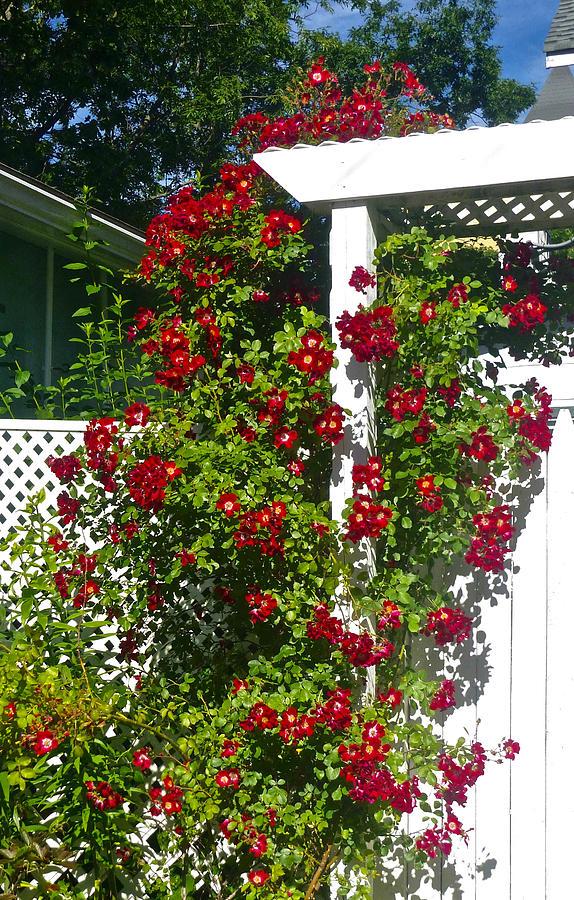 Roses and Garden Gate by Ellen Paull