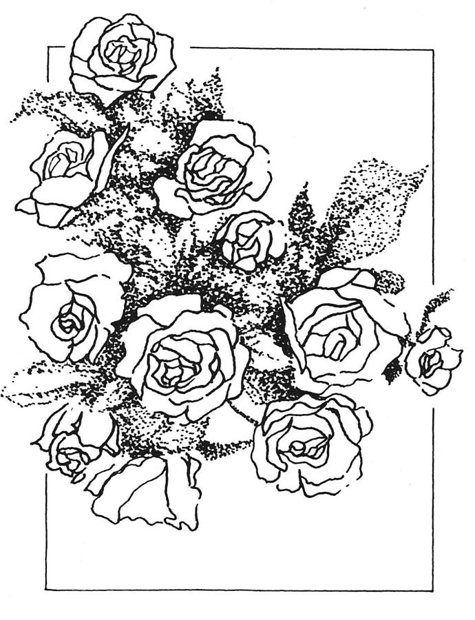 Roses Drawing - Roses by Kevin Heaney