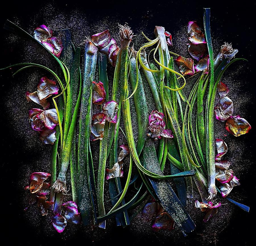 Rosy Leeks by Sarah Phillips