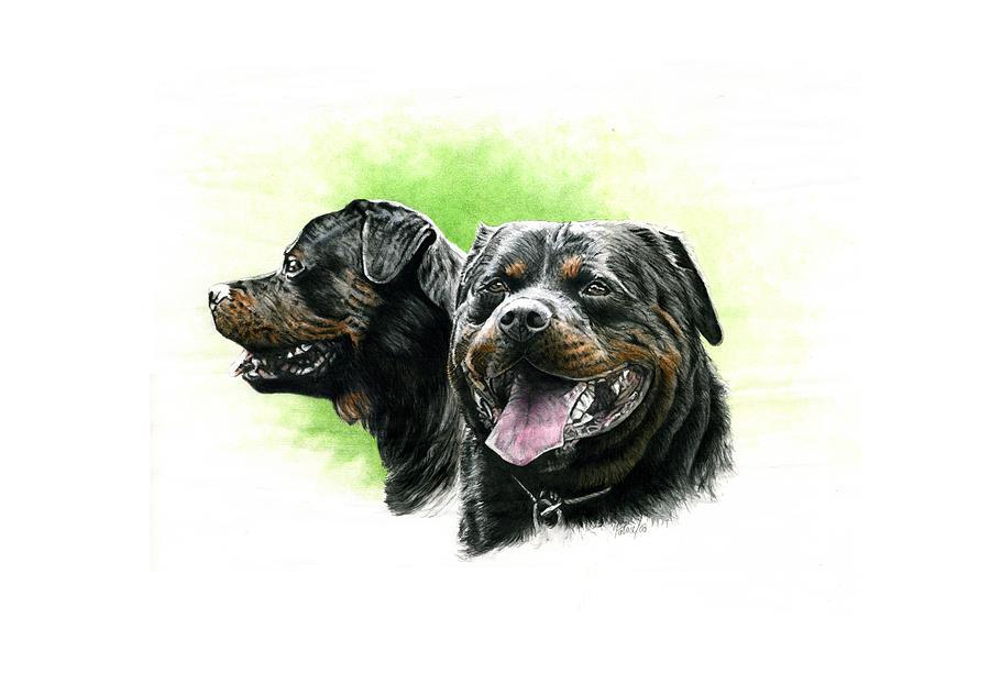 Rottweiler Head Study by Patrice Clarkson