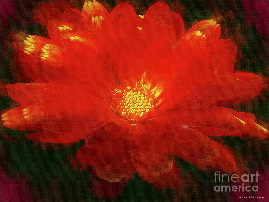 Rouge Gerbera Daisy Digital Art