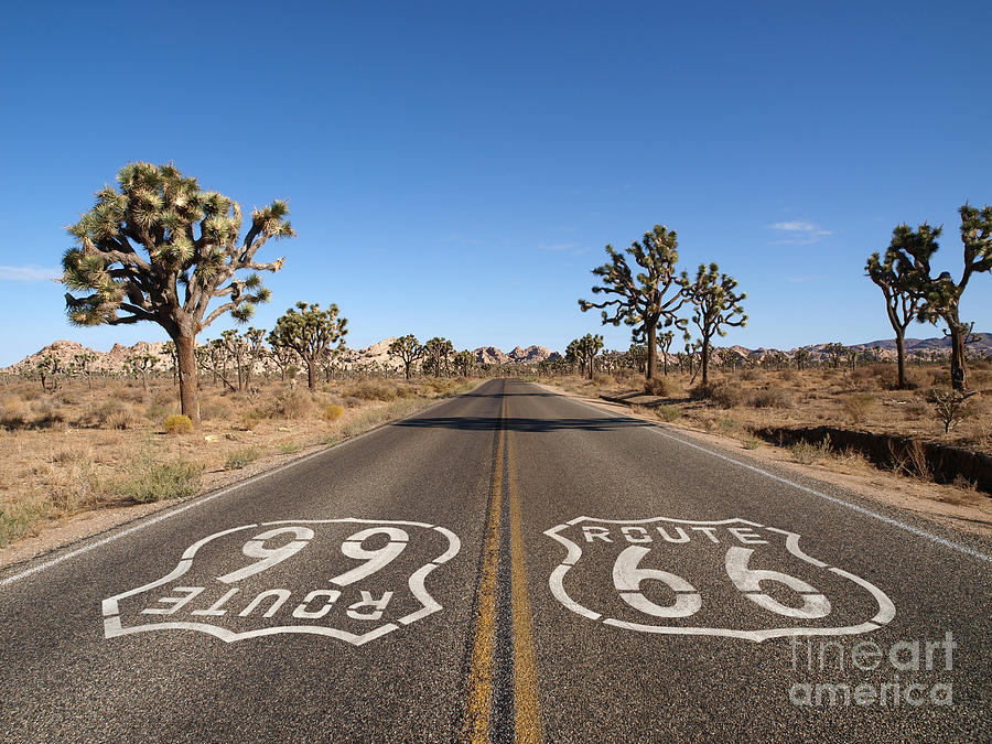 66 Photograph - Route 66 With Joshua Trees Deep Inside by Trekandshoot