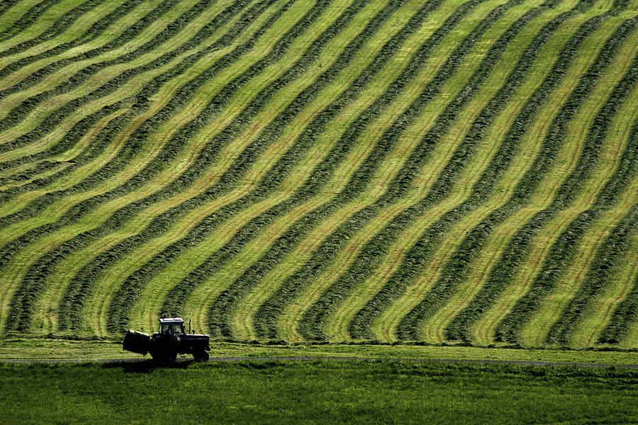 Farm Photograph - Rows Of Hay by Bror Johansson