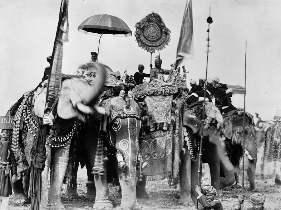 Royal Elephants Photograph by Hulton Archive