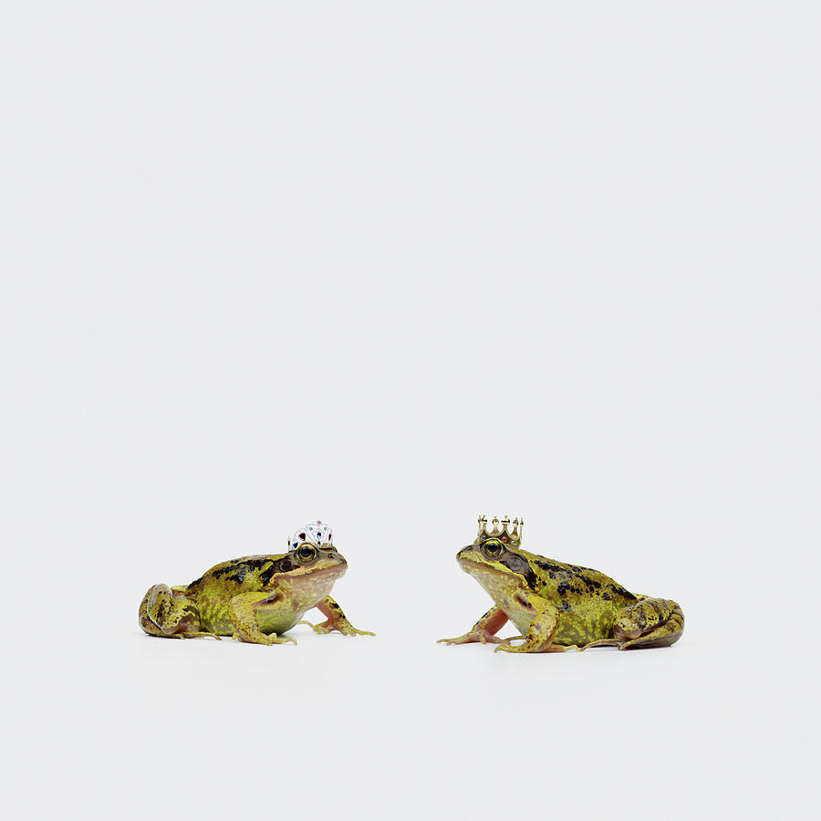 Royal Frogs Photograph by Maarten Wouters