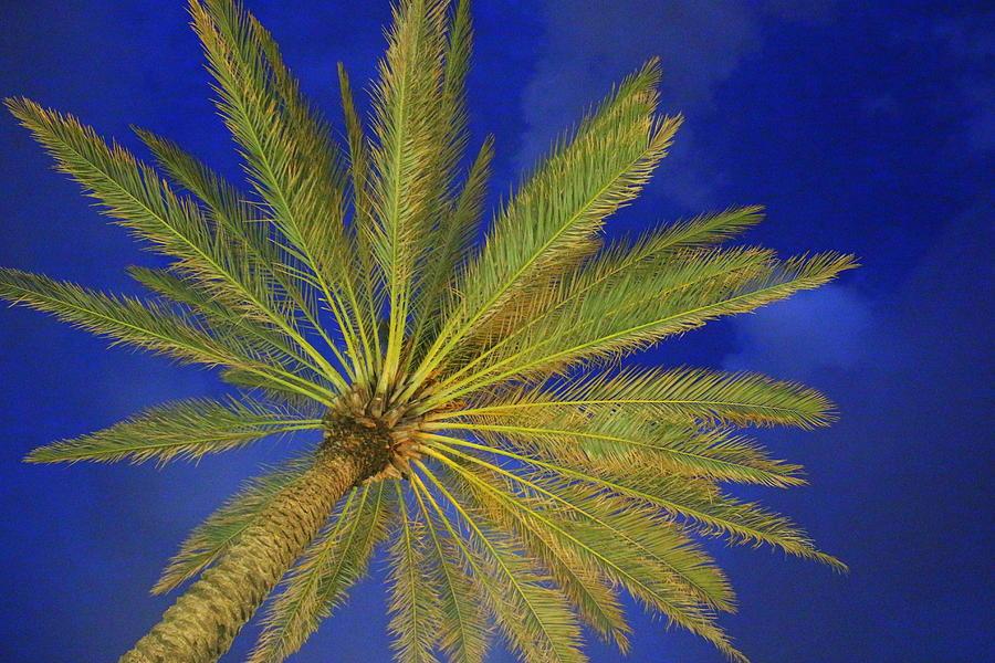 Lifestyle Photograph - Royal Palm And The Blue Hour by Dora Sofia Caputo Photographic Design and Fine Art