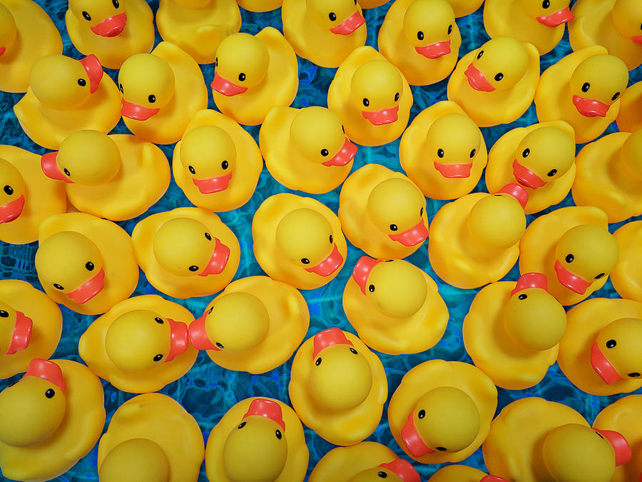 Rubber Duck Meet and Greet by Debi Dalio