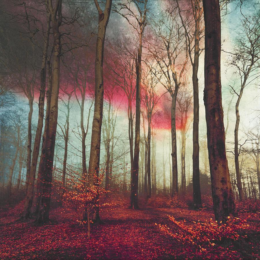 Forest Photograph - Ruby Red Evening by Dirk Wuestenhagen