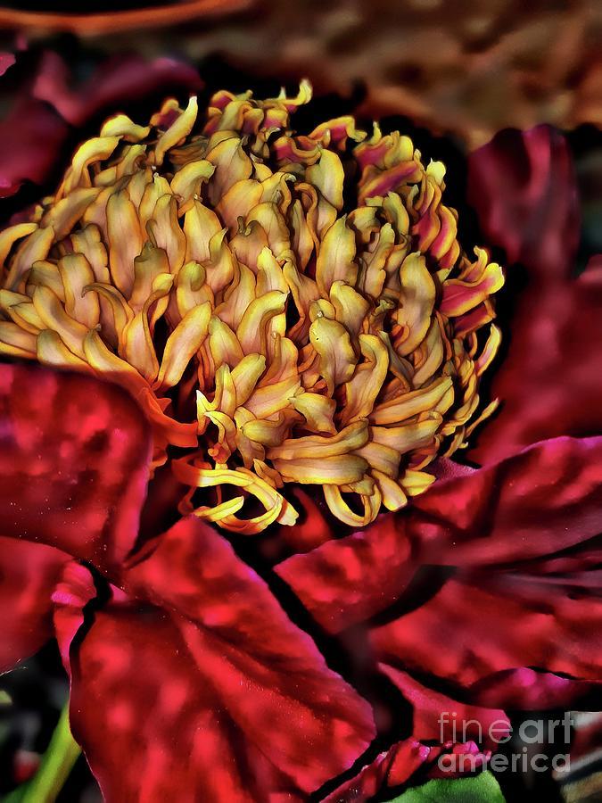 Ruby Red Peony by Jolanta Anna Karolska