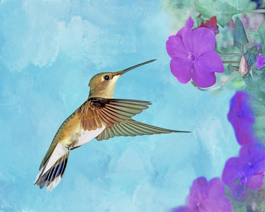 Ruby-throated Hummingbird with Impatiens by Nikolyn McDonald