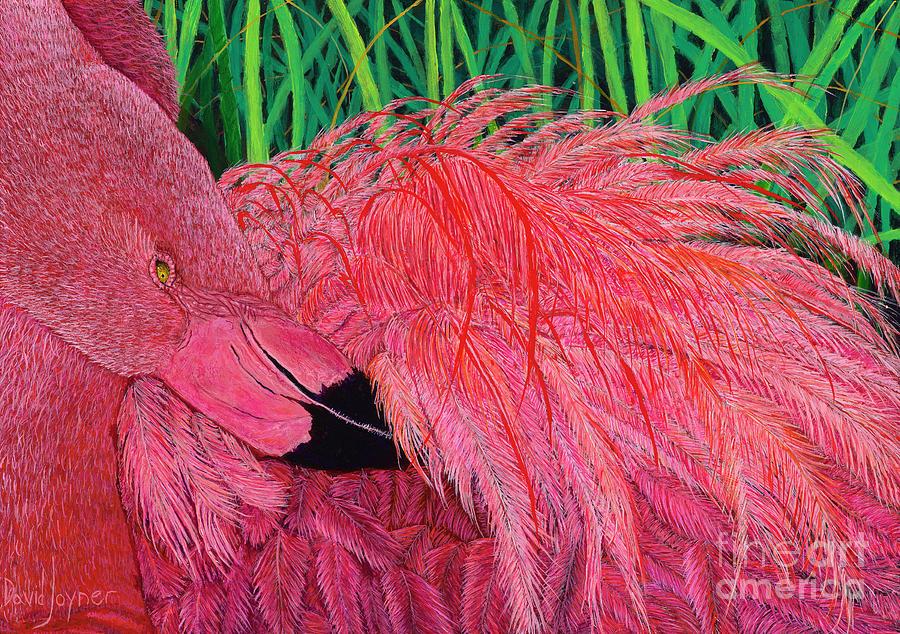 Ruffled Flamingo by David Joyner