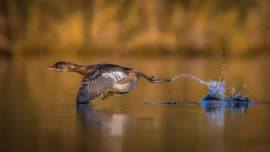Wild Photograph - Run For Life by Faisal Alnomas