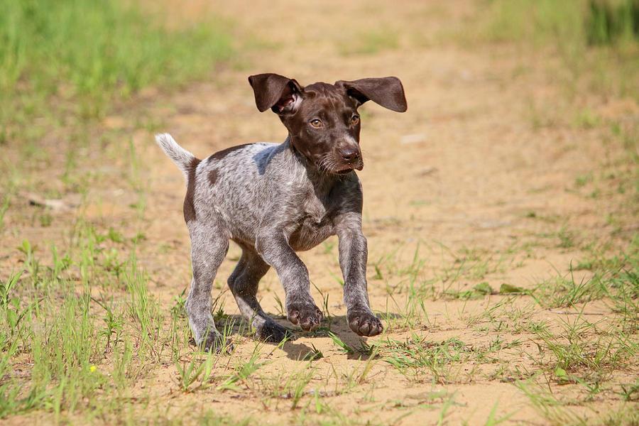 Run Pup by Brook Burling