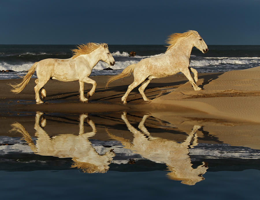Running Camargue Horses And Reflection Photograph by Adam Jones