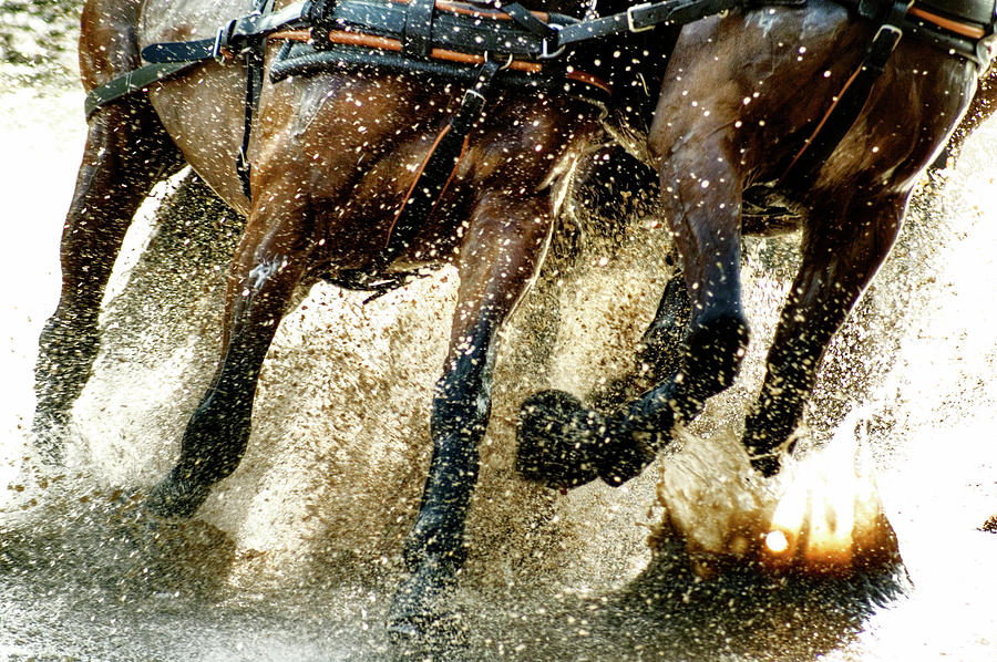 Running Horses Photograph by Cristina Corduneanu