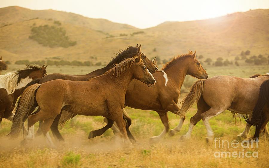 Running Horses by Diane Diederich