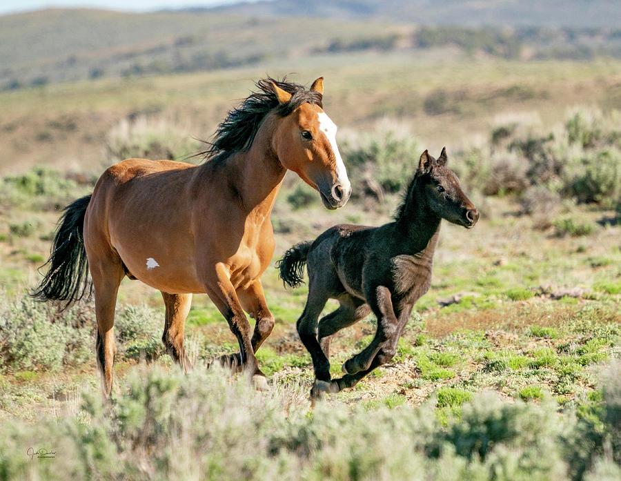 Running Wild Mustangs - Mom and Baby by Judi Dressler