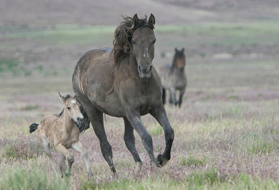 Running With Mom by Kent Keller