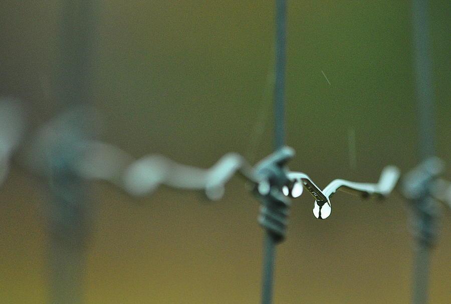 Rural Photograph - Rain Song... by Thomas Gorman