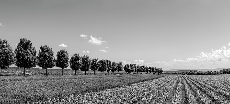Horizontal Photograph - Rural Scene With Fields, Baden by Panoramic Images