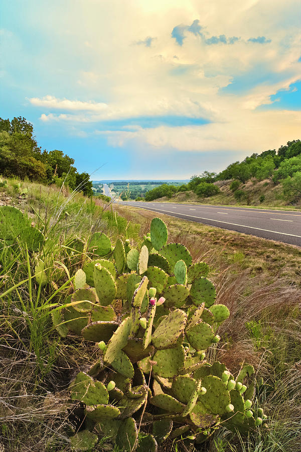 Rural Texas Highway, Prickly Pear Photograph by Dszc