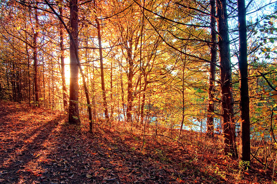 Russell Ontario Conservaton Area Photograph by Ryan Watts