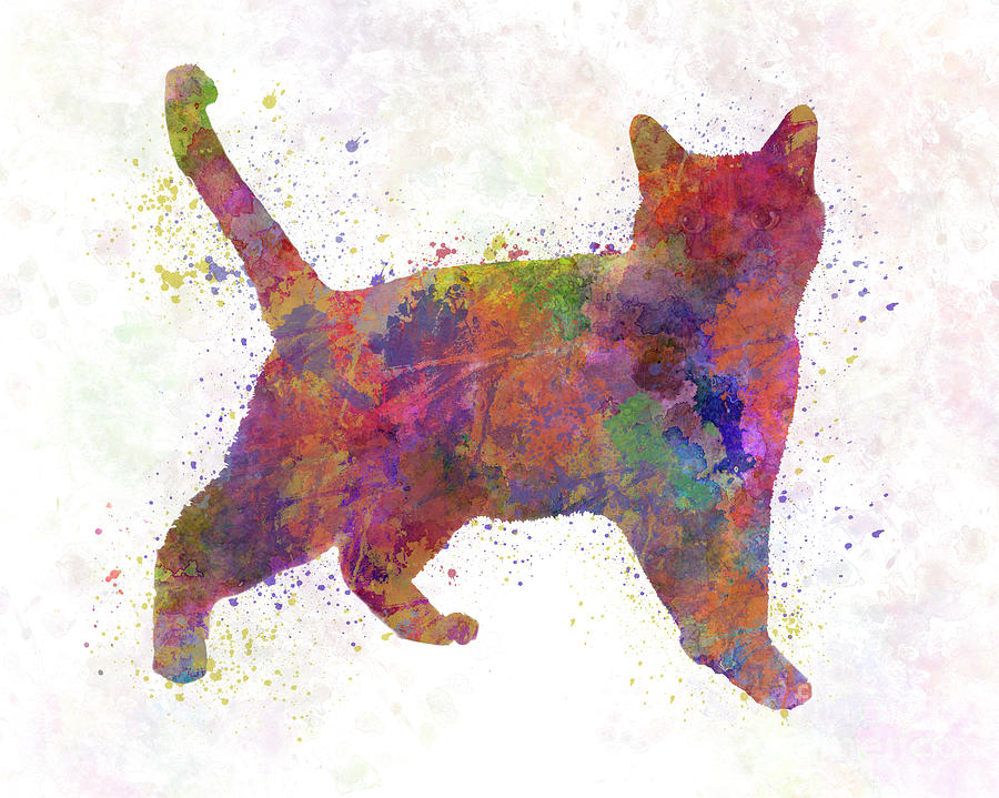 Russian  cat in watercolor by Pablo Romero