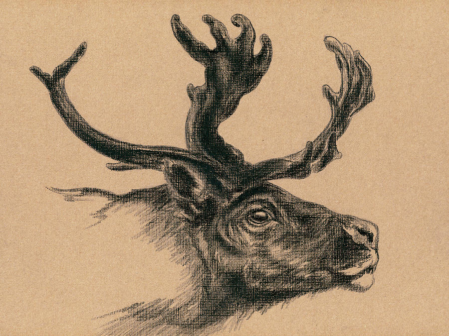 Rustic Reindeer by MM Anderson