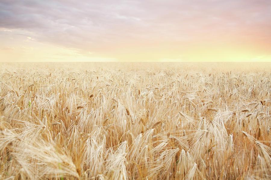Rye Field Photograph by Nadyaphoto