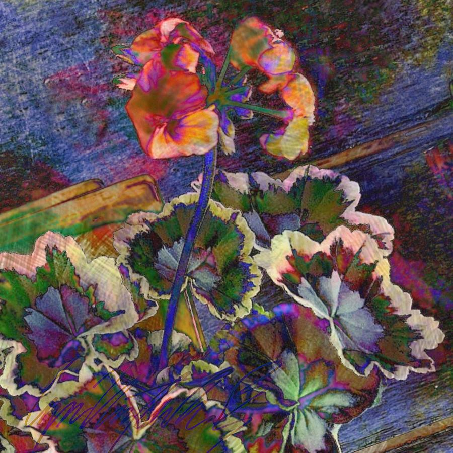 S Textured Variegated Geranium Plant - Square by Lyn Voytershark