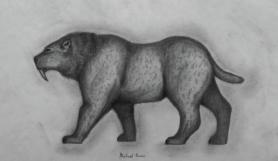 Sabertooth Cat Drawing