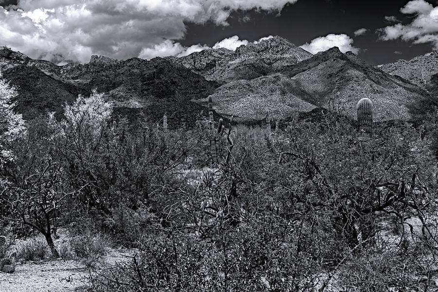 Sabino Canyon No56 Photograph