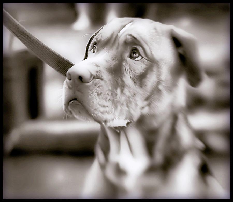 Sad Dog Photograph by L. Toshio Kishiyama