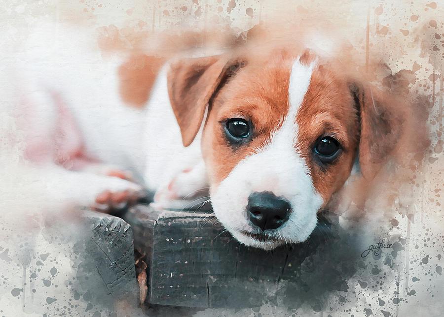 sad jack russel puppy paintingjohn guthrie