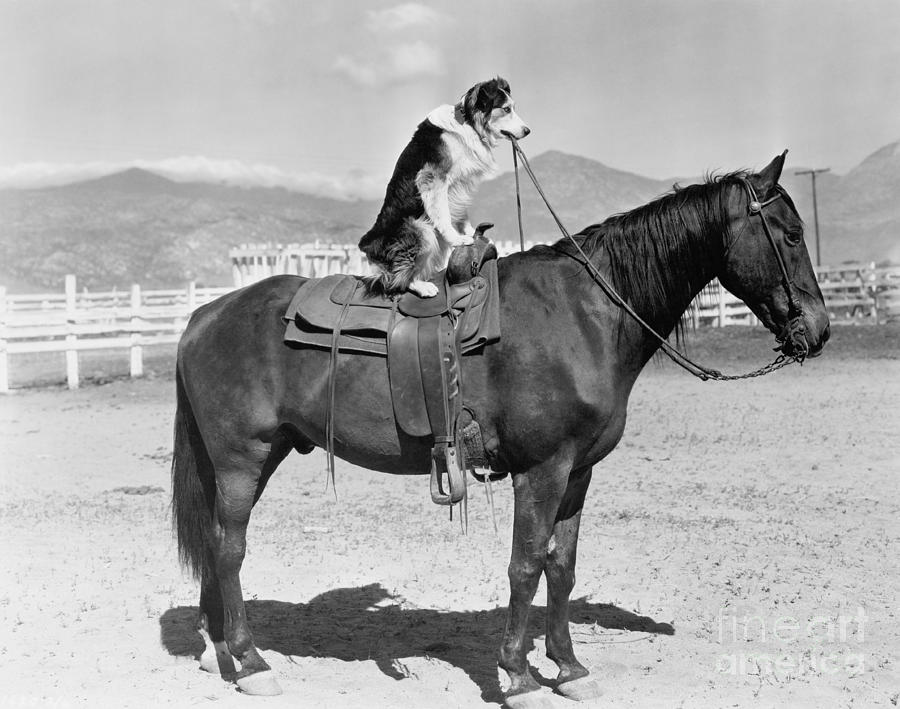 Country Photograph - Saddle Up by Everett Collection