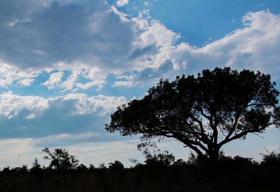 Safari Silhouette by Marcy Wielfaert
