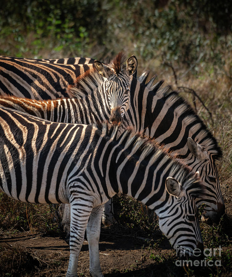 Safe with Family by Jamie Pham