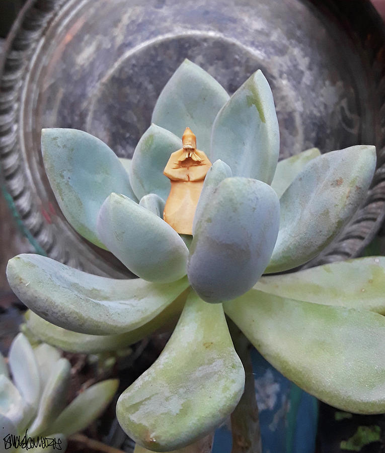 Sage in a Succulent by Ismael Cavazos