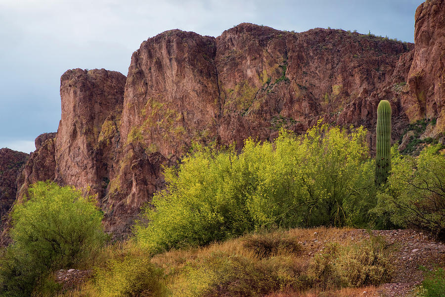 Arizona Landscape Photograph - Saguaro And Blooming Desert Plants by Dave Dilli