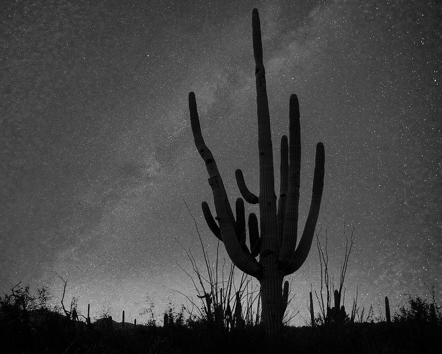Saguaro By Starlight Photograph by Tim Fitzharris