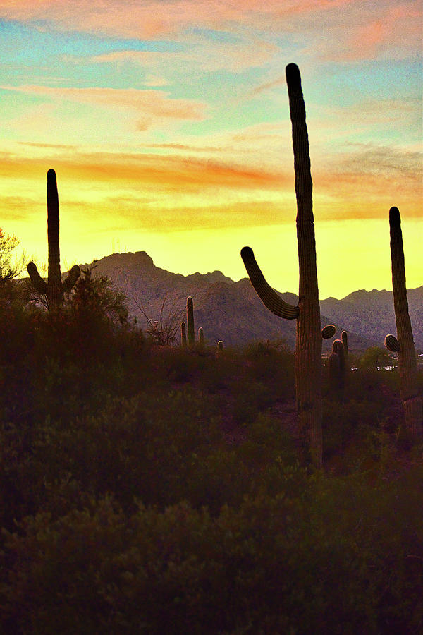 Saguaro Cacti and Tucson Mountains at Sunset by Chance Kafka