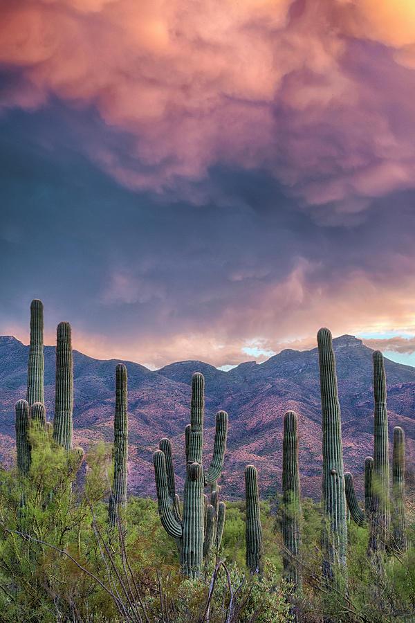 Saguaro Cactus Stormy Skies by Dave Dilli