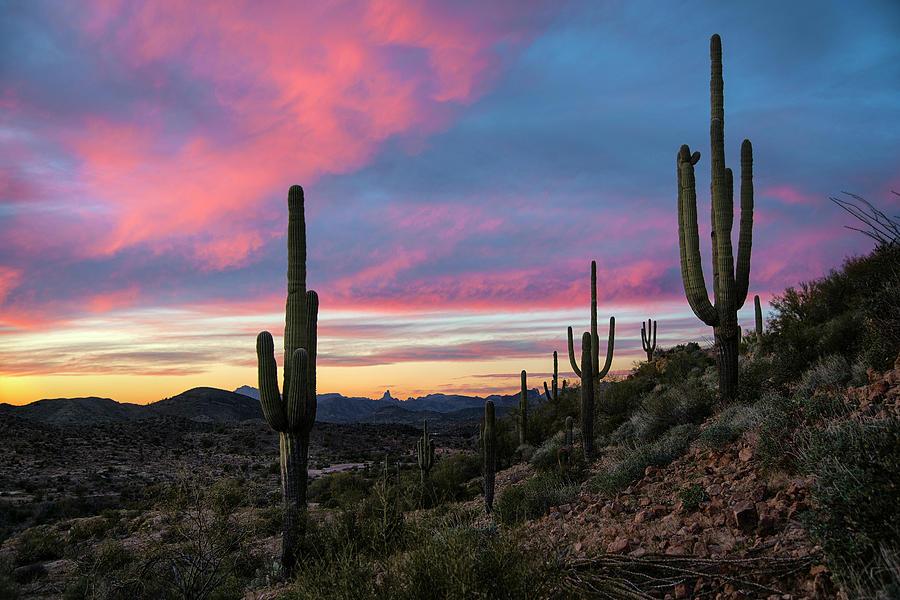 Purple Sunset Photograph - Saguaro Cactus Sunset Near Superior Arizona by Dave Dilli