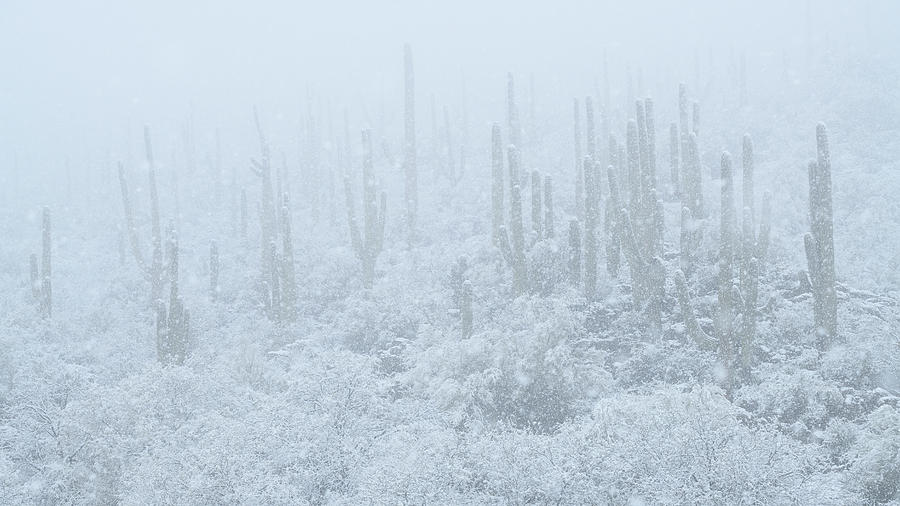 Saguaro Forest Blizzard by James Covello